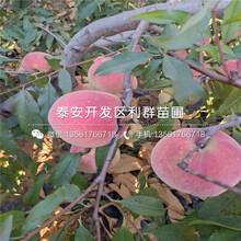 春美桃苗圖片