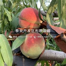 双红夏丽桃树苗、双红夏丽桃树苗报价及基地图片