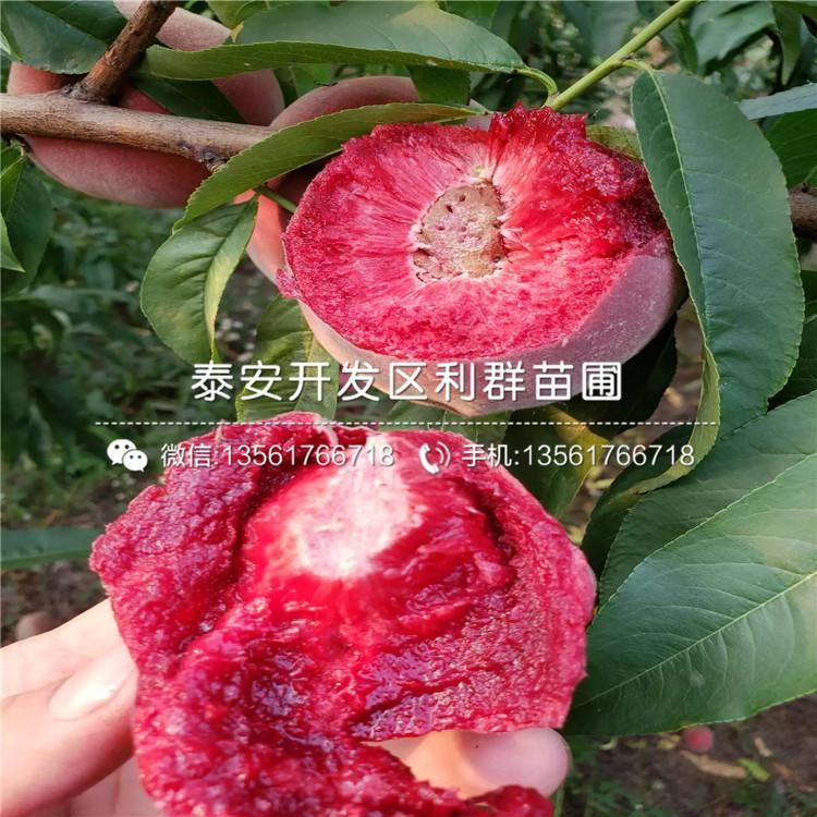 黃肉蟠桃樹苗、黃肉蟠桃樹苗價格