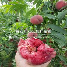 新川中岛桃树苗品种、新川中岛桃树苗基地及报价图片