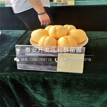 黄冠桃树苗、黄冠桃树苗新品种图片