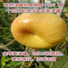 早桃苗、早桃苗品种图片