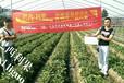 草莓冲施肥规格,巴西利果草莓冲施肥生产商