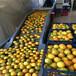 深圳高價回收二手食品設備,果汁廠設備回收,果蔬生產線回收