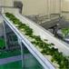承德現金回收果蔬生產線,果汁廠設備等二手食品設備
