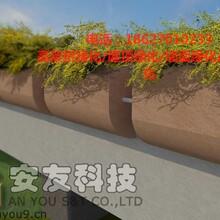 河道綠化設計及施工方案圖片