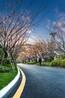 彩色生态透水混凝土地坪园林景观道路施工流程