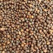 茶籽信阳毛尖茶籽信阳毛尖种子