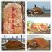 广东深圳园林石公司园林石价格园林石图片黄色园林石