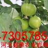 新郑市新技术农业岩棉块培育蔬菜瓜果