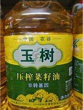 玉树食用油压榨非转基因菜籽油中国农谷荆楚粮油
