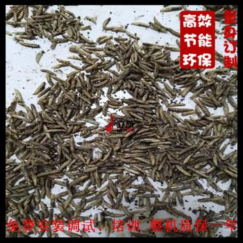 泰安大麦虫熟化机