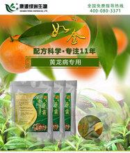如金品牌种植专用原液种植菌剂芹菜种植图片