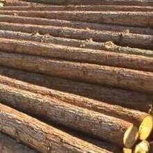 原木进口报关-进口木材-黄埔木材清关