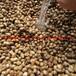 伯乐树种子有货供应