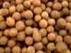 大叶樟种子有货供应