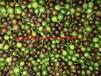 竹柏种子有货供应