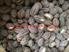 2017珍稀类珙桐种子有货供应