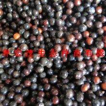 6月檫木种子接受预定图片