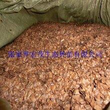 杉木种子有货供应图片
