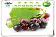 黑加仑提取物25%国标花色苷花青素天然抗氧化
