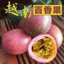 越南百香果5斤装(非广西果)图片