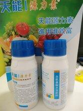 水稻育苗专用肥批发,水稻壮秧剂厂家,水稻壮秧剂价格图片