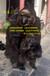 大型仿真动物QZA-023母子猩猩