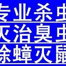 长宁区专业白蚁防治,崇明县饭店抓白蚂蚁