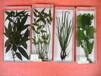 鑫鑫教学:厂家直销动物组织切片、植物切片,各种组培,病理切片等