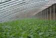 青岛阳光板温室图片,青岛阳光板厂家电话