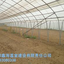 内黄县简易连栋拱棚建设设计蔬菜大棚建造队伍