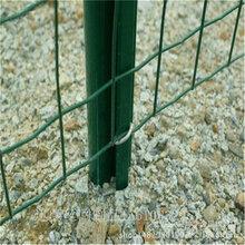 深泽绿地围网A绿地围网批发厂家A坚固防晒绿地铁丝网图片