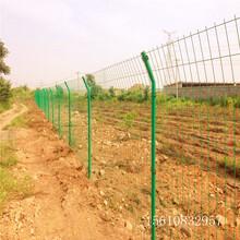 农业园林苗木铁丝网,低价格高质量,农业合作社围栏网,迅鹰防护网厂家图片