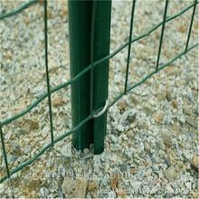 园林封闭网,美观耐用的金属网,临汾绿色护栏网厂家图片