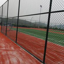 球场围网A岳阳市球场围网厂A四米高球场围网订做图片