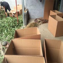 白草莓苗供应商邮寄方式红袖添香草莓苗多少钱图片