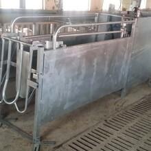 青島神農專業生產自動母豬飼喂系統價格便宜性能好圖片