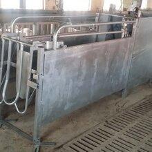 青岛神农专业生产自动母猪饲喂系统价格便宜性能好图片
