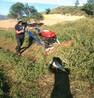 小型手推稻麦割晒机小麦收获打捆机荞麦收割机