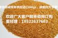 供应进口饲料原料美国DDGS代替玉,口DDGS已被广泛应用到饲料当欢迎订购