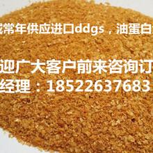 供应进口饲料原料美国DDGS代替玉,口DDGS已被广泛应用到饲料当欢迎订购图片