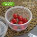 澳強花紋快餐盒打包盒外賣盒飯盒便當盒透明圓形打包碗圓碗塑料碗950