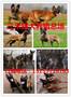 全国供应马犬纯种马犬养殖场图片