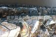 铝锌合金石笼网_铝锌合金钢丝石笼网厂家_金照价格低