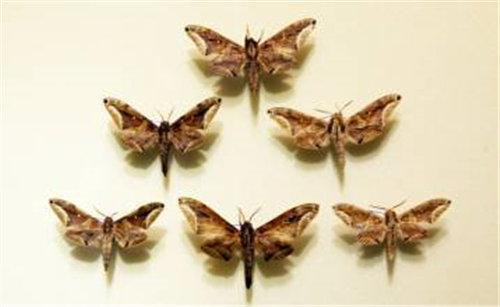 昆虫标本拍卖价格还会变动吗