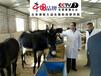 肉用驴催肥饲料专用的叫驴饲料生产厂家泽牧久远