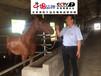 专业运动类马匹专用马粮赛马饲料品牌大全