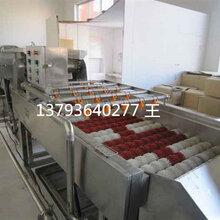 苹果清洗机毛刷式喷淋清洗机水果清洗机厂家
