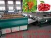 山东龙口凯祥6xy-2樱桃选果机,减少樱桃损伤,提高商品率